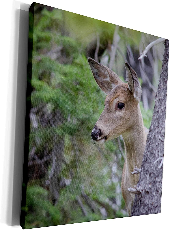 3dRose Danita Delimont - Deer - White Tail Deer Portrait Fishercap Lake, Glacier National Park - Museum Grade Canvas Wrap (cw_206810_1)