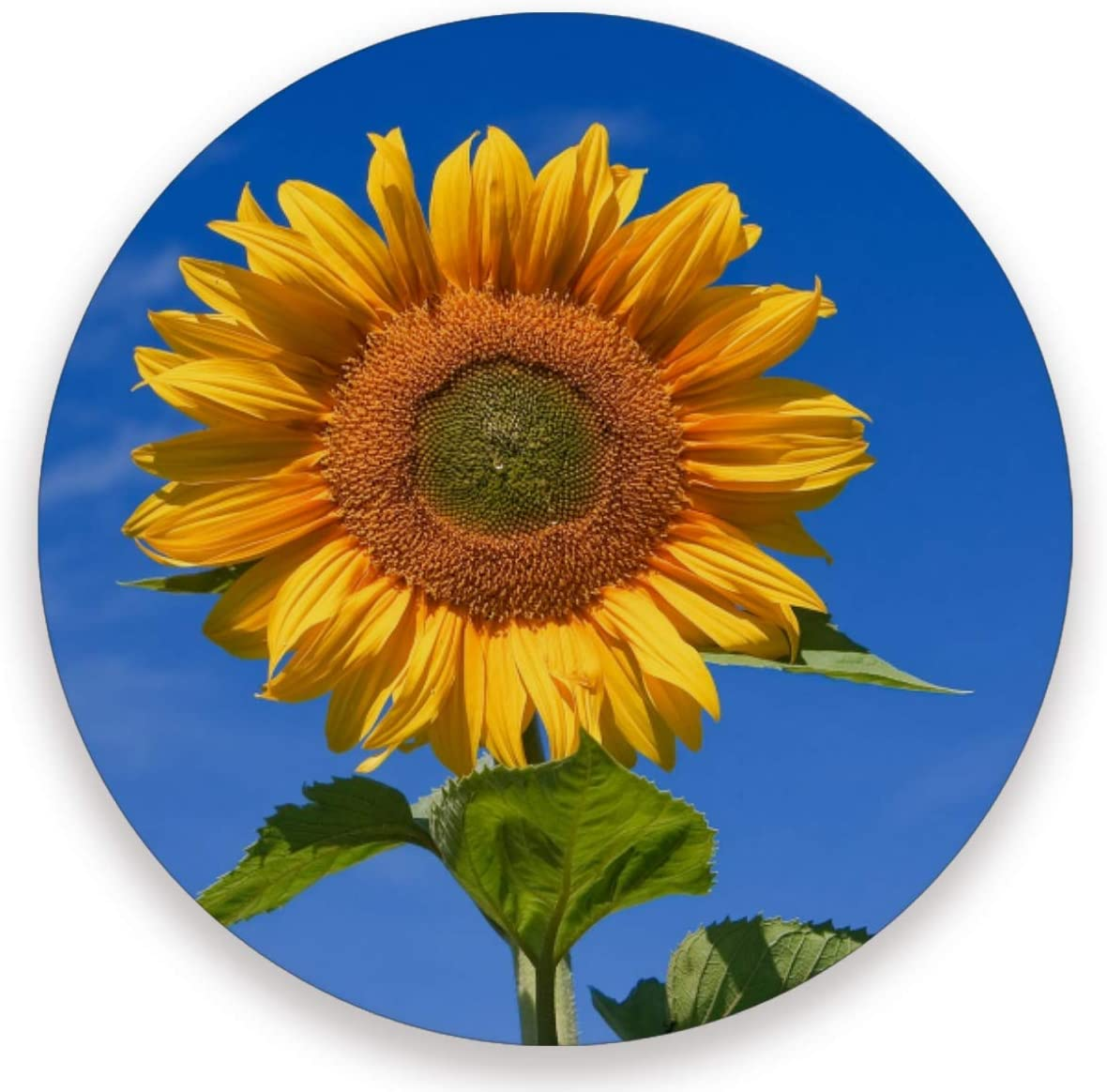 Olinyou Sunflowers Blue Sky Coasters for Drinks Set of 4 Absorbent Ceramic Stone Round Coaster with Cork Base