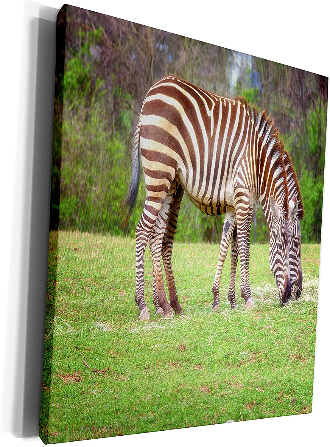 3dRose Mike Swindle Photography - Animals - Zebras eating grass - Museum Grade Canvas Wrap (cw_302557_1)