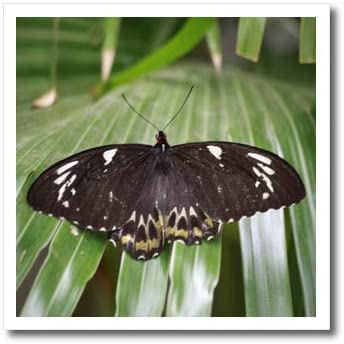 3dRose TDSwhite – Spring Seasonal Nature Photos - Black White Butterfly Stretches Wings Long Green Leaves - 8x8 Iron on Heat Transfer for White Material (ht_321853_1)