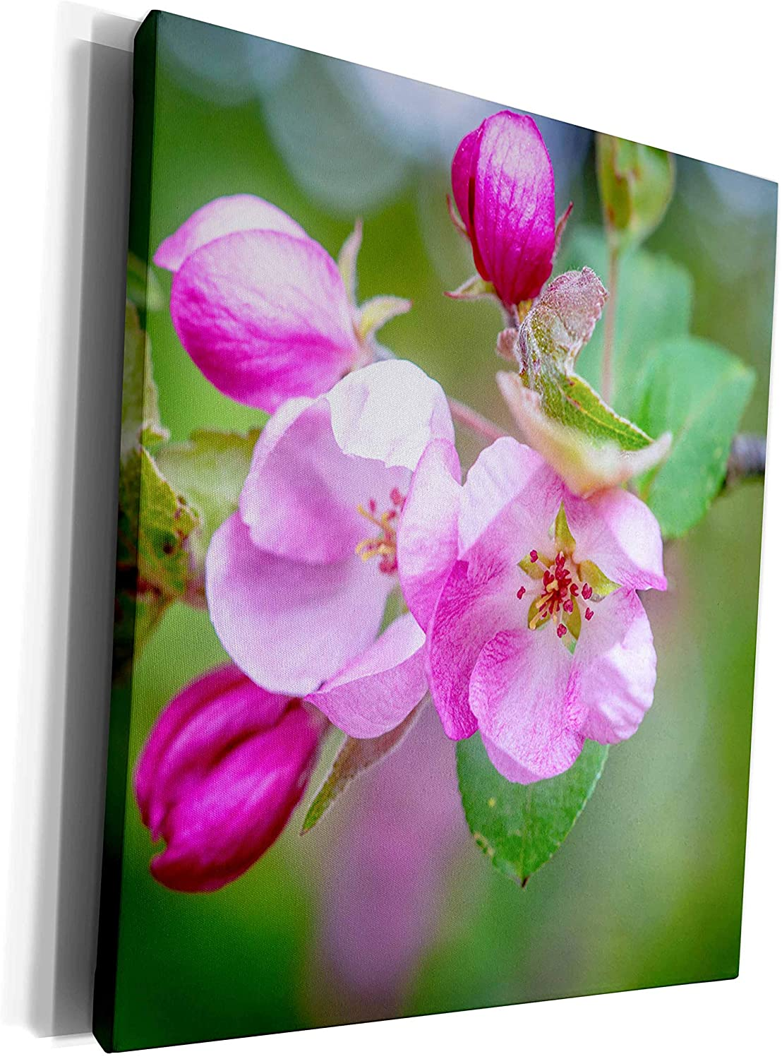 3dRose Alexis Photography - Flowers Crab Apple - Two pink crab apple flowers, soft green background - Museum Grade Canvas Wrap (cw_270531_1)