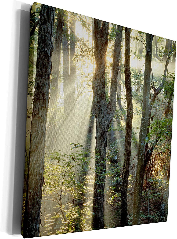 3dRose Danita Delimont - Kentucky - Oak, hickory forest, Mammoth Cave NP, Kentucky - US18 RKL0024 - Raymond Klass - Museum Grade Canvas Wrap (cw_90428_1)