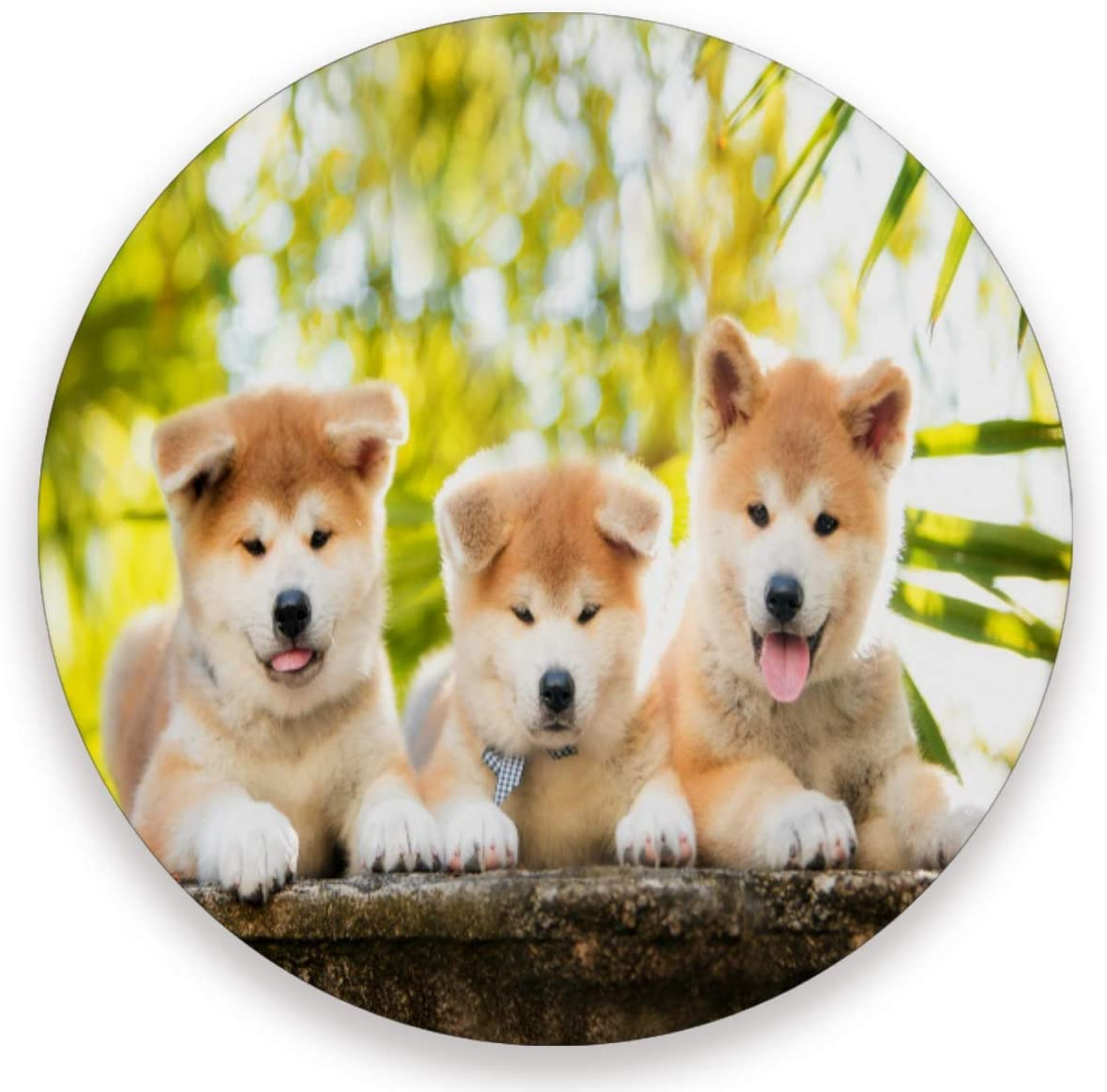Olinyou Cute Animal Akita Dogs Coaster for Drinks 1 Pieces Absorbent Ceramic Stone Coasters with Cork Base