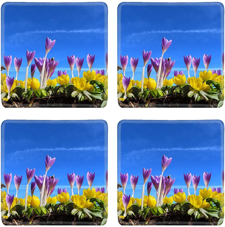 MSD Natural Rubber Square Coasters Set of 4 Design for Crocus Spring Nature Flower Purple Color Blossom Macro Plant Green Violet G