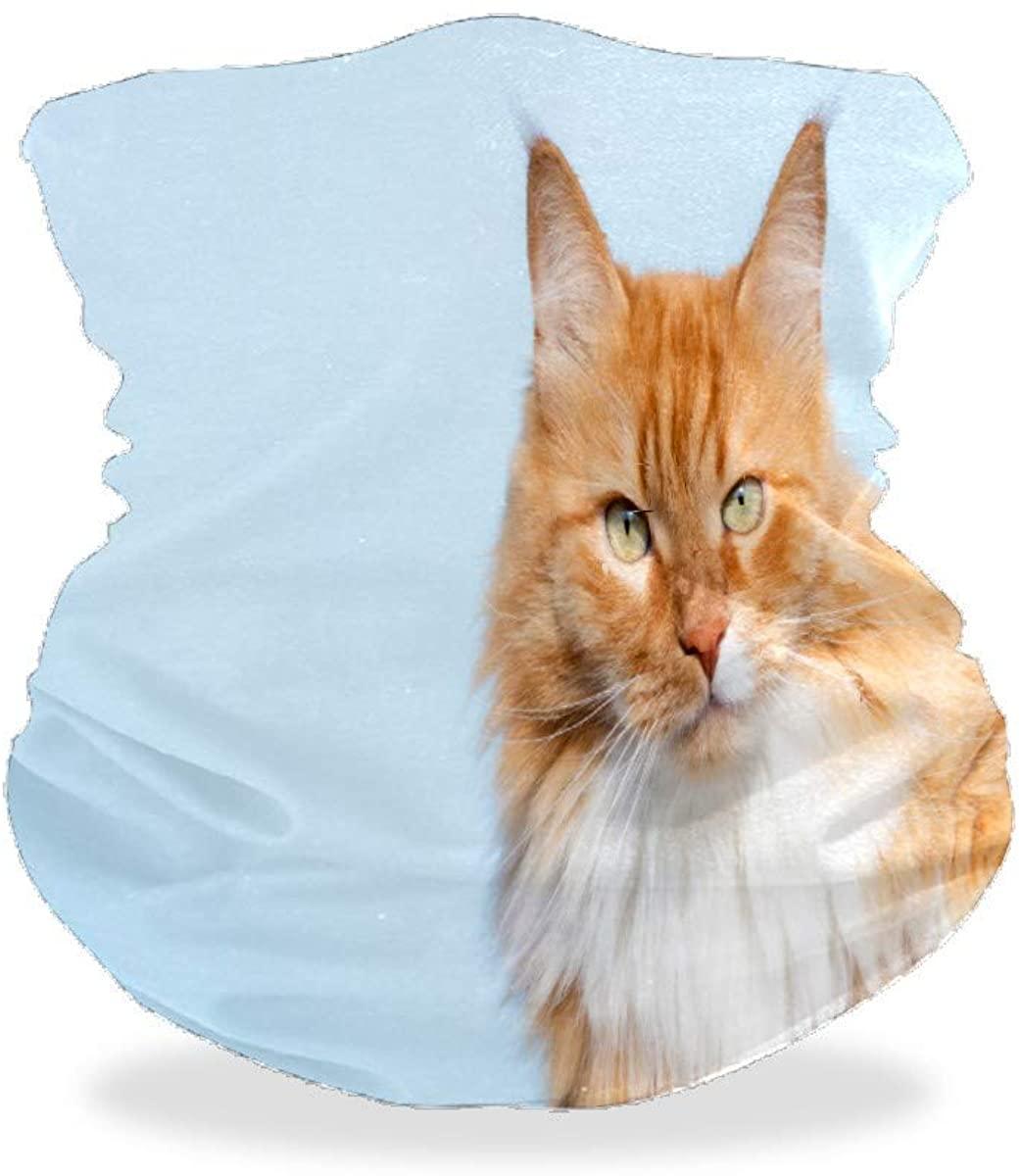 Cute Cat Looking Camera Bandana Face Mask for Dust Wind UV Sun Product Neck Gaiter Helmet Liner Headwear Balaclava Scarf Outdoors Mask for Women Men Adults$Kids