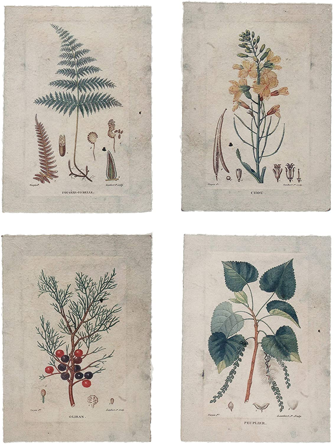 Creative Co-op Paper Vintage Reproduction Botanical, Set of 4, 10 in. x 14 in. Framed Print, Multi