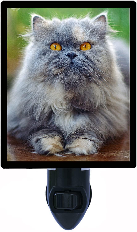 Cat Night Light, Grey Persian Cat