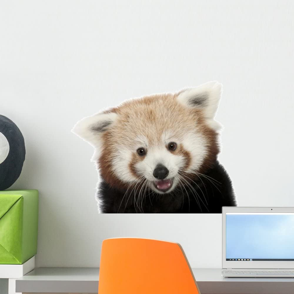 Wallmonkeys Close-up Red Panda Wall Decal Peel and Stick Animal Graphics (18 in W x 14 in H) WM398823