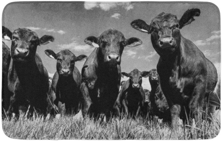 Adowyee 20x30 Bath Mat Black Angus Bull and Heifers Shot from Low Angle Cozy Bathroom Decor Bath Rug with Non Slip Backing