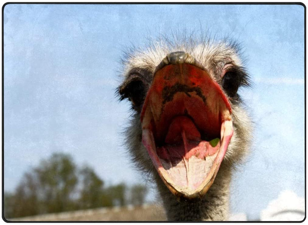 Ostrich Mouth Non-Slip Plush Rugs Super Soft Modern Rug Area Carpets Cute Bedroom Rug Living Room Carpet for Kids Girls Woman Ground pad Blanket