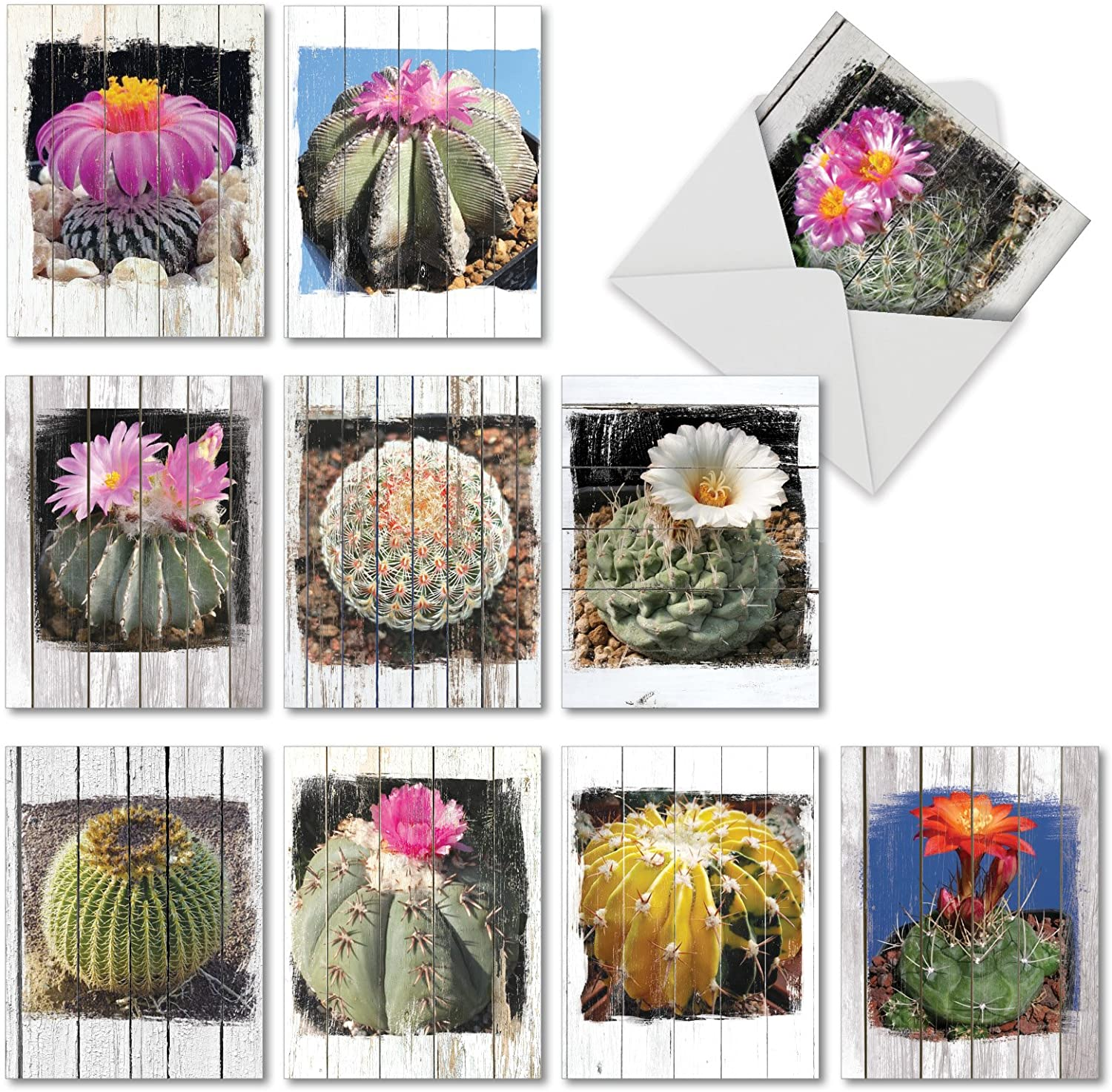 Flowering Cactus Spheres - 10 All Occasion Note Cards with Envelope (4 x 5.12 Inch) - Variety of Plant Images Appreciation Greeting Cards - Nature Stationery Notecard Pack Set AM6439OCB-B1x10