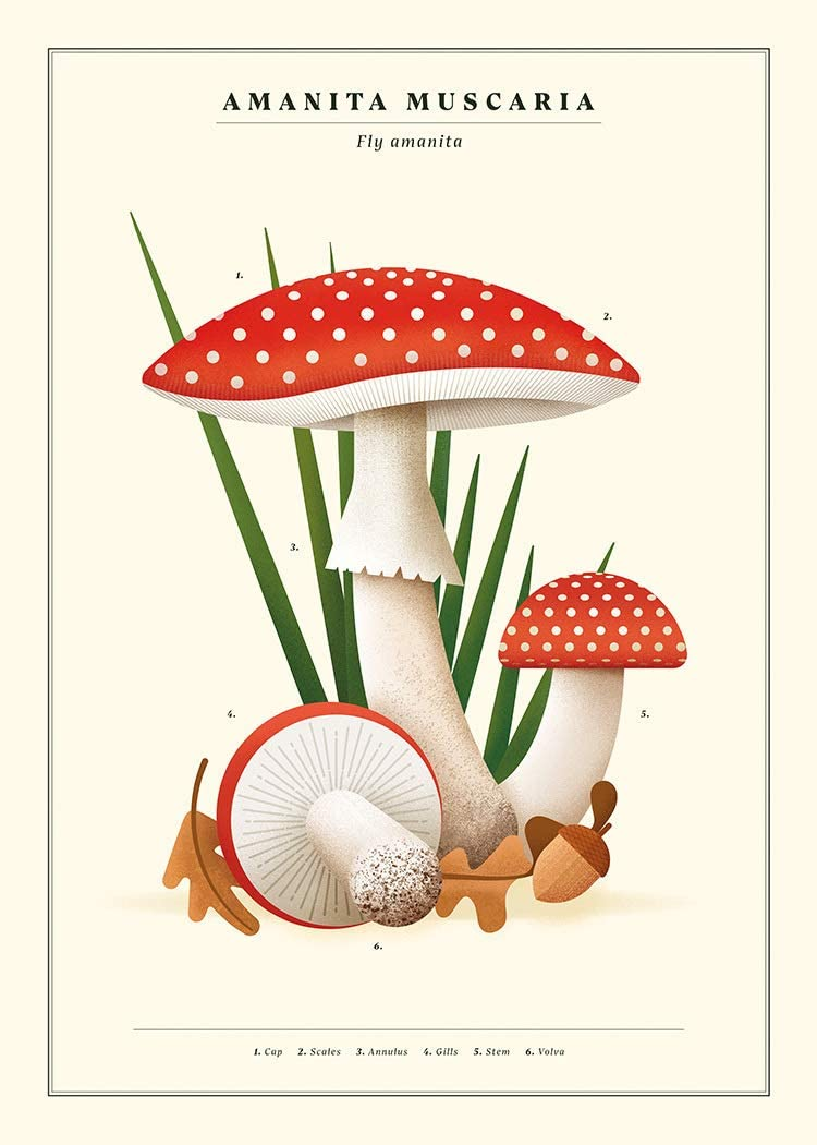 Walladore Botanical Poster with Fly Agaric