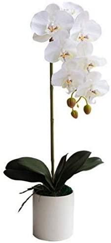 PFLife Artificial Orchid in Pot White 1 or 2 Stems Faux Flowers in Vase Moss Home Office Hotel Restaurant (1 Stem)