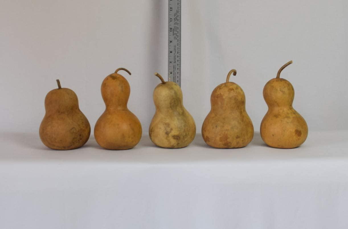 Box of 5 Dried Bottle Gourds - 4 Diameter