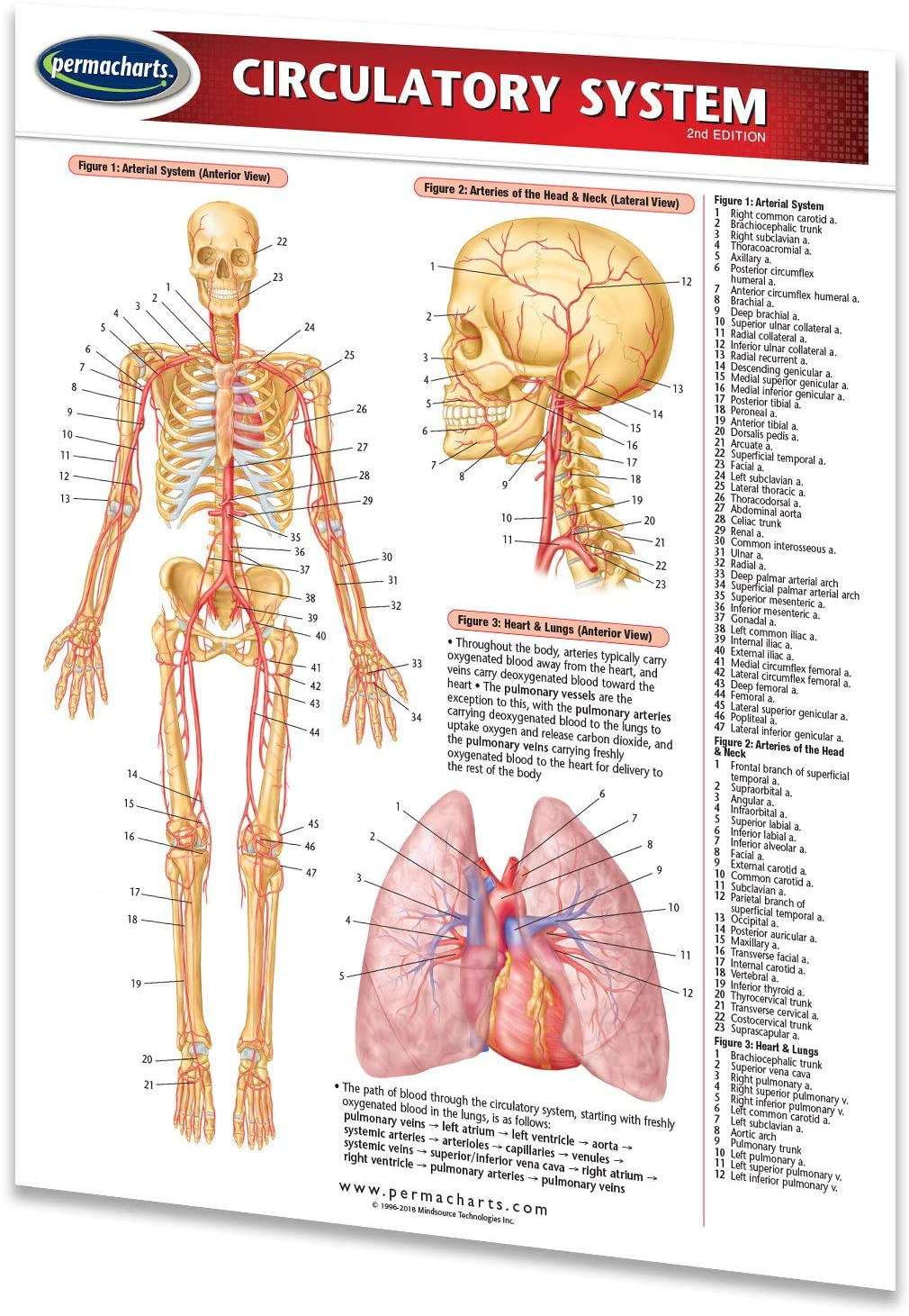 Circulatory System Guide - Medical Quick Reference Guide by Permacharts