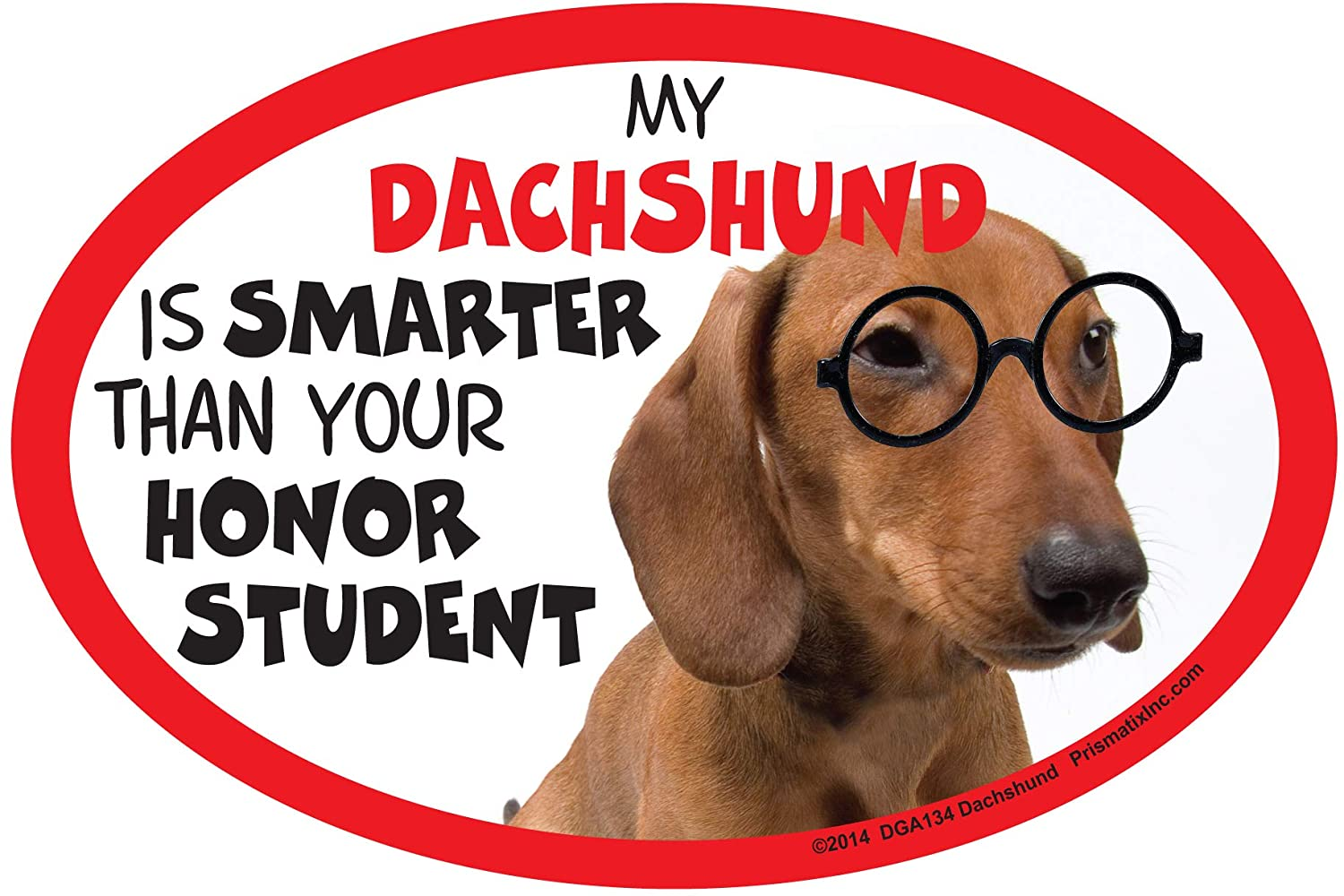 Dachshund Car Magnets: My Dachshund is Smarter Than Your Honor Student - Oval 6