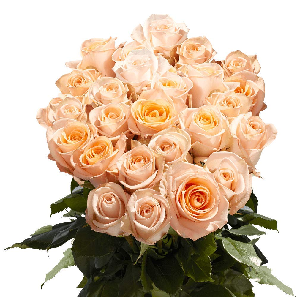GlobalRose 150 Peach Osiana Long Stem Roses - Fresh Flowers for Weddings or Anniversary.