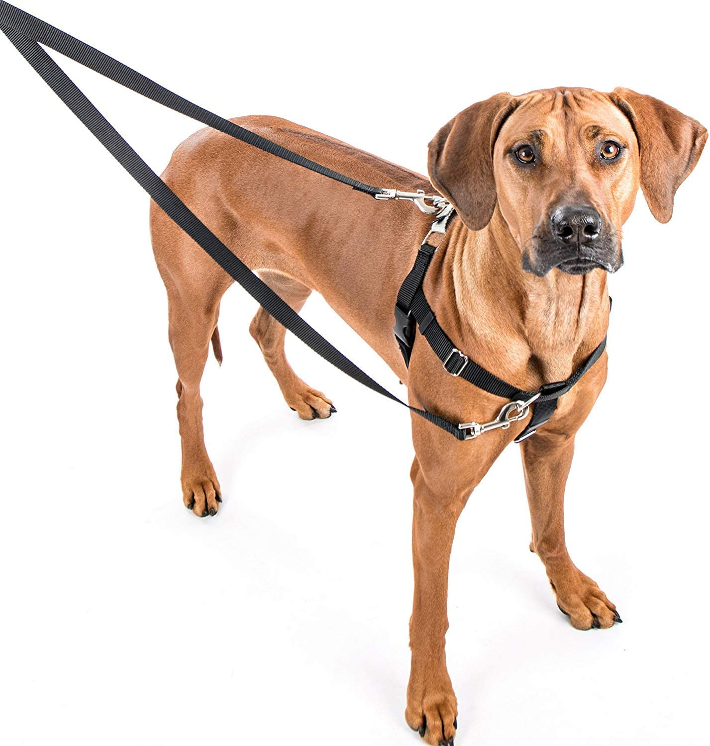 2 Hounds Design Freedom No-Pull Dog Harness Training Package, Large, Navy