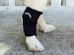 Walkabout Harnesses Hock wrap for Dogs and Cats