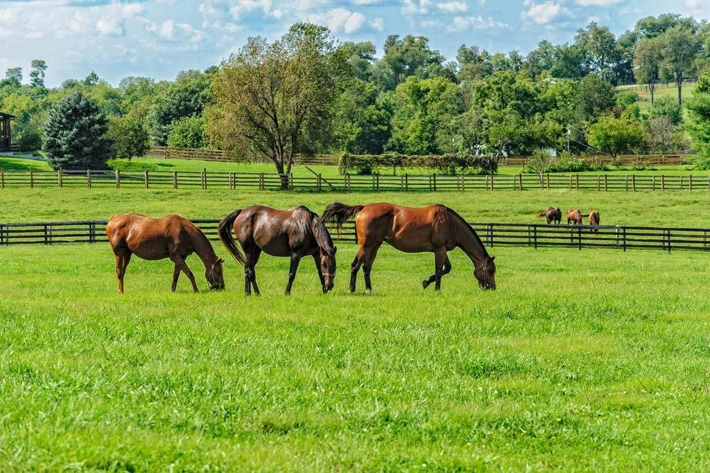 Thoroughbred Horses Grazing in Pasture Photo Photograph Cool Wall Decor Art Print Poster 36x24