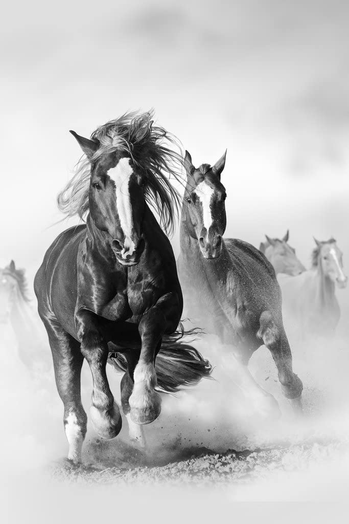 Wild Mustang Horses Running Galloping Free Black and White Photo Cool Wall Decor Art Print Poster 12x18
