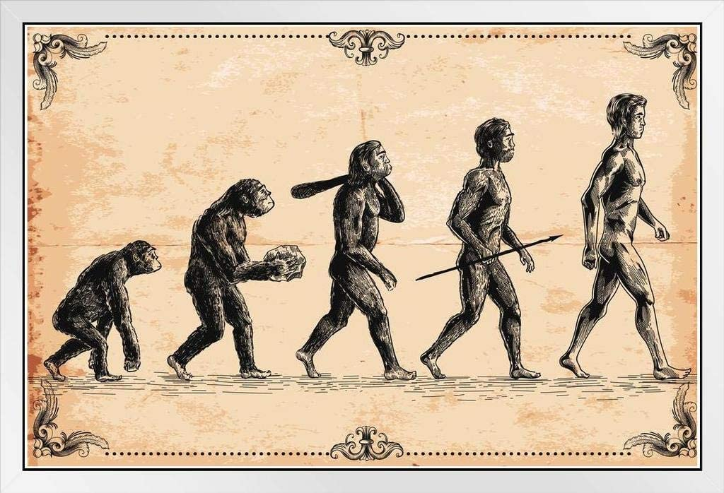 Human Evolution Concept Vintage Illustration White Wood Framed Poster 20x14