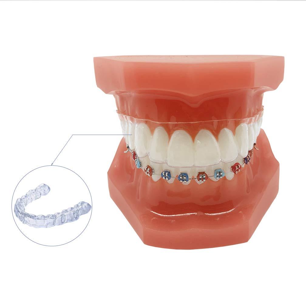 Invisible Orthodontic Tooth Model YOUYA DENTAL Dental Teaching Teeth Model with Metal Braces Bracket for Dentist Teaching Tools to Display