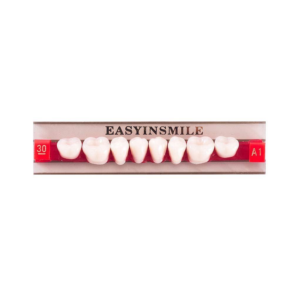 Easyinsmile Dental Synthetic Resin Teeth Acrylic Denture False Tooth for Adults Full Set/Anterior/Posterior (Lower Posterior Teeth 30L, A1)