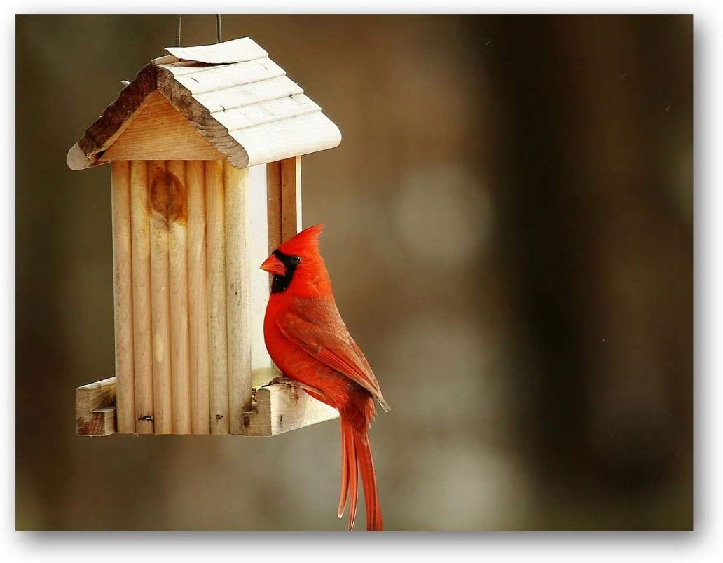 Cardinal Greeting Cards - Bird Note Cards - Blank on the Inside - Includes 12 Cards and Envelopes - 5.5