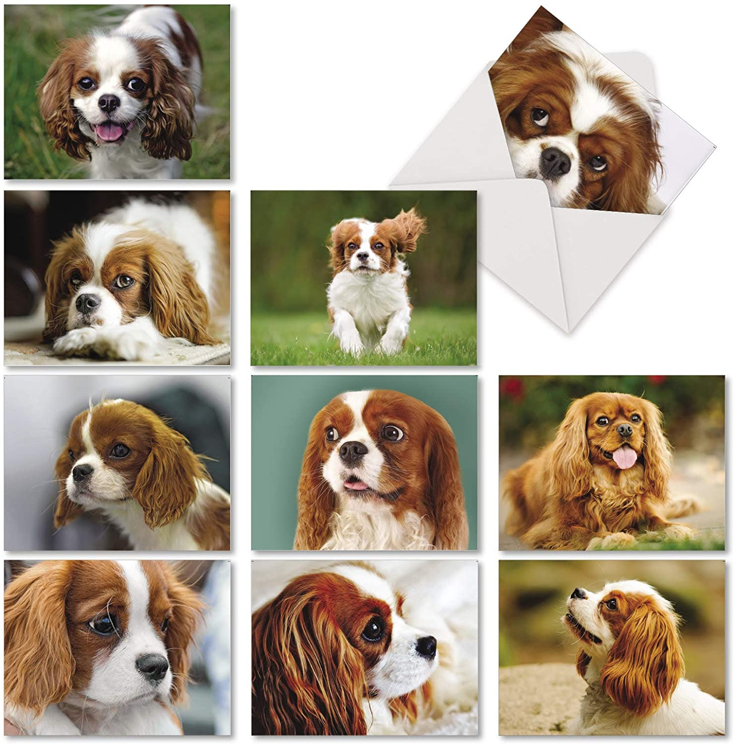 The Best Card Company - 10 Adorable Blank Dog Cards (4 x 5.12 Inch) - Pet Dog Breed Assortment, Boxed - Cavalier King Charles AM6831OCB-B1x10