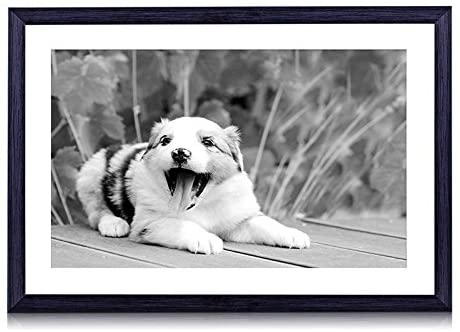 GLITZFAS Australian Shepherd Puppy Muzzle-Animal - Art Print Black Wood Framed Wall Art Picture Black and White (24x16 inches Framed)