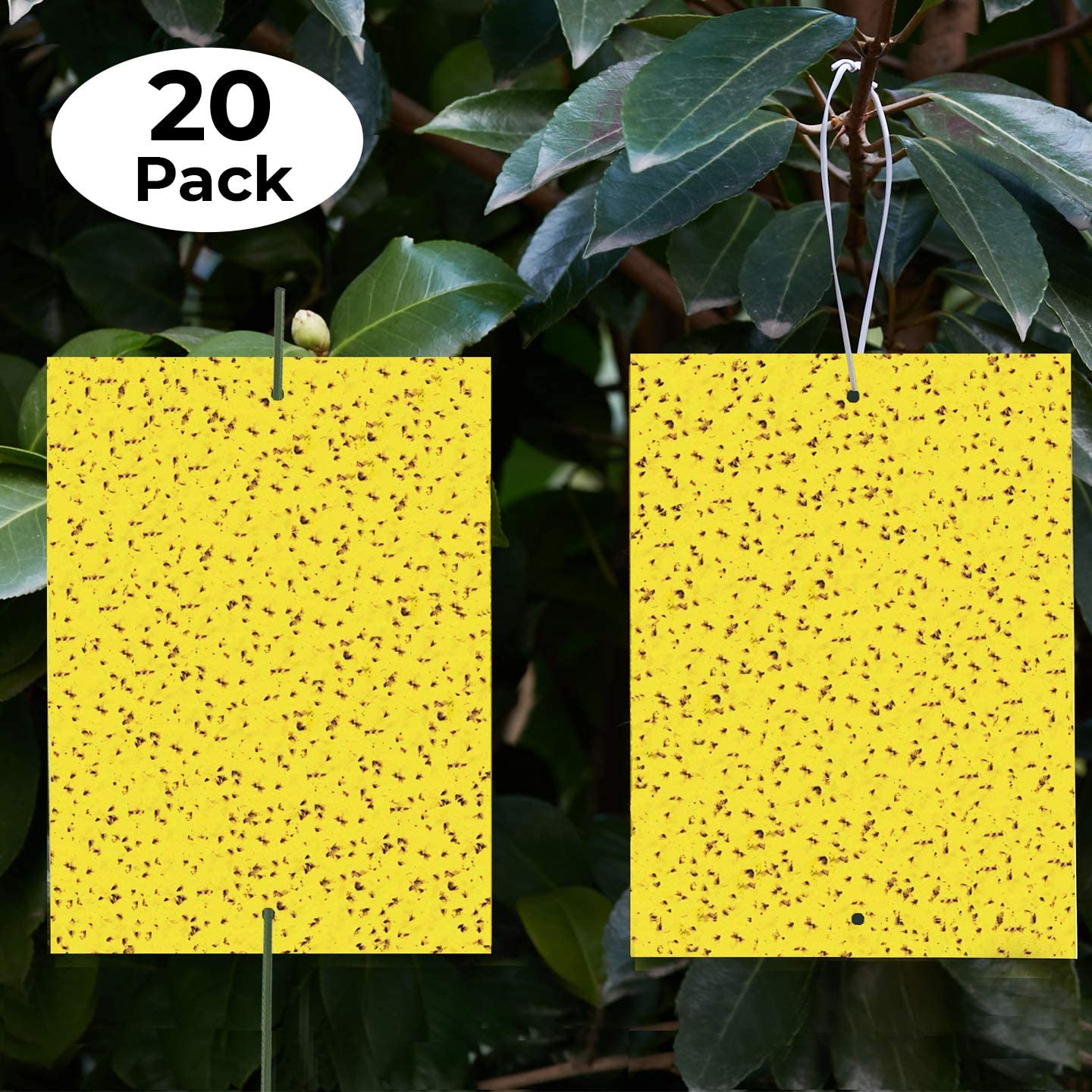 Yellow Sticky Traps (20 Pack) - Gnat Trap - Gnat Killer - Fruit Fly Paper - Fly Traps Indoor Sticky - Yellow Sticky Traps Fungus Gnat - Sticky Traps Insects - Fruit Flies - Dual-Sided - Indoor/Outdoor