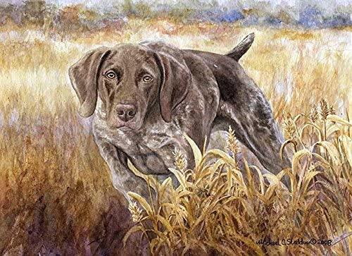 Michael Steddum Strike A Limited Edition German Shorthaired Pointer Print