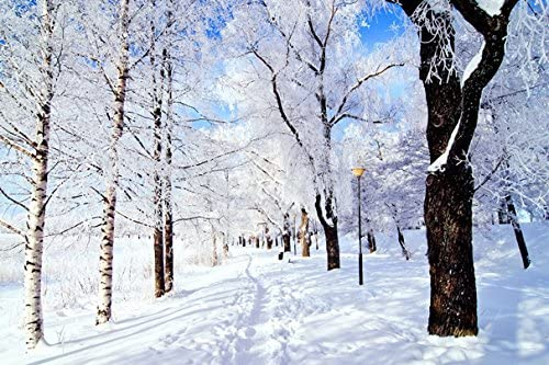 Trail trees snow frost day winter (No.011316) - Poster Art Print on Canvas 36x24 inch