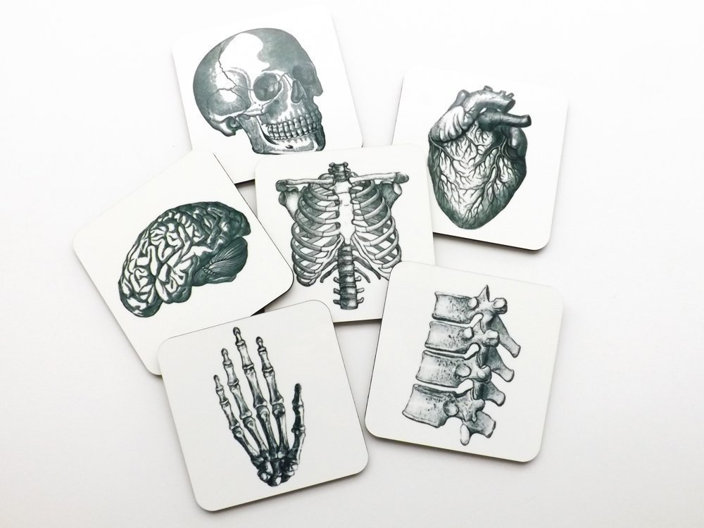 Human Anatomy Coasters 3.75 inch square cork back skull brain hand anatomical heart medical