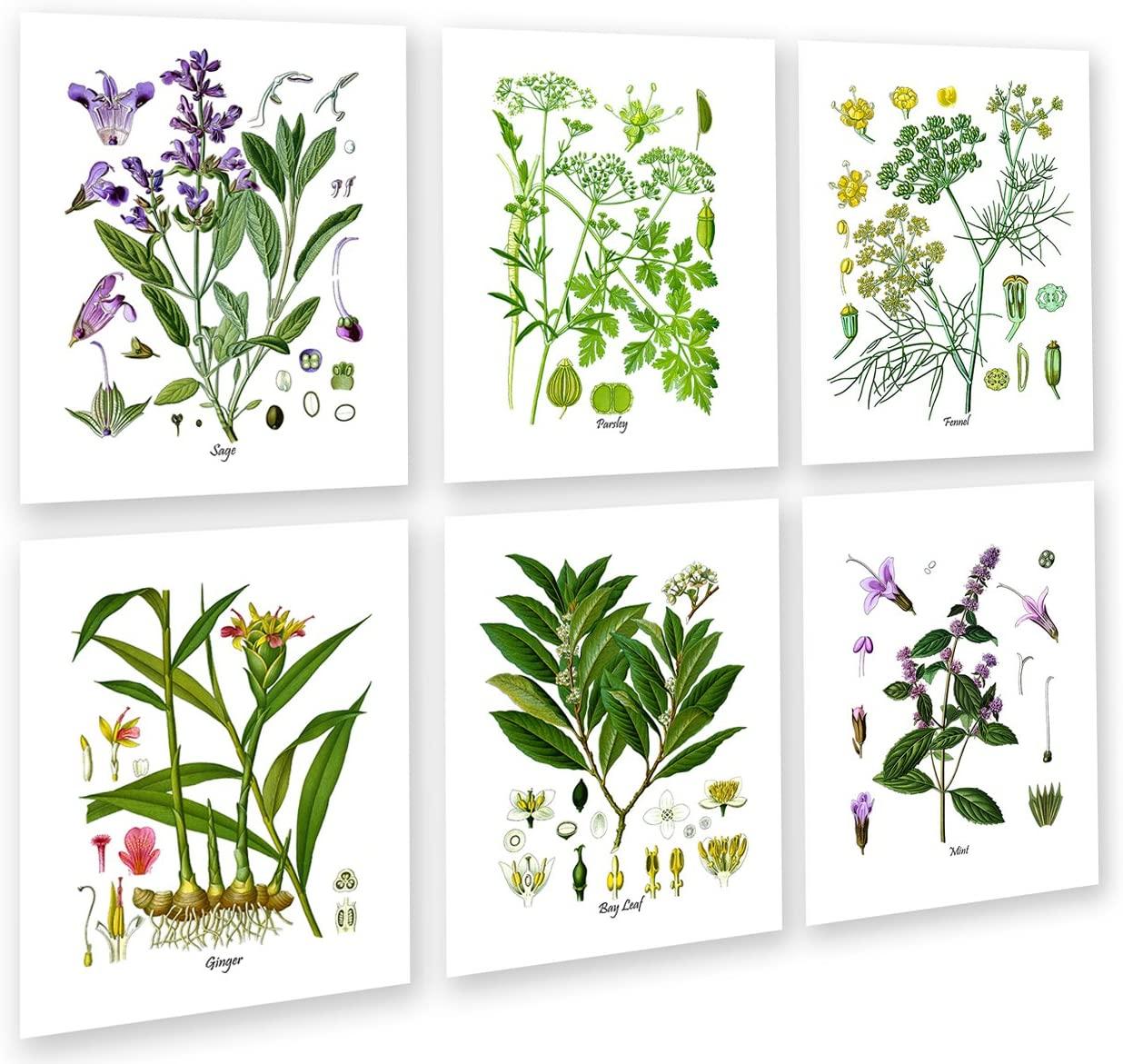 Botanical Herb Prints Wall Art Set of 6 Unframed Botanical Prints Kitchen Wall Decor