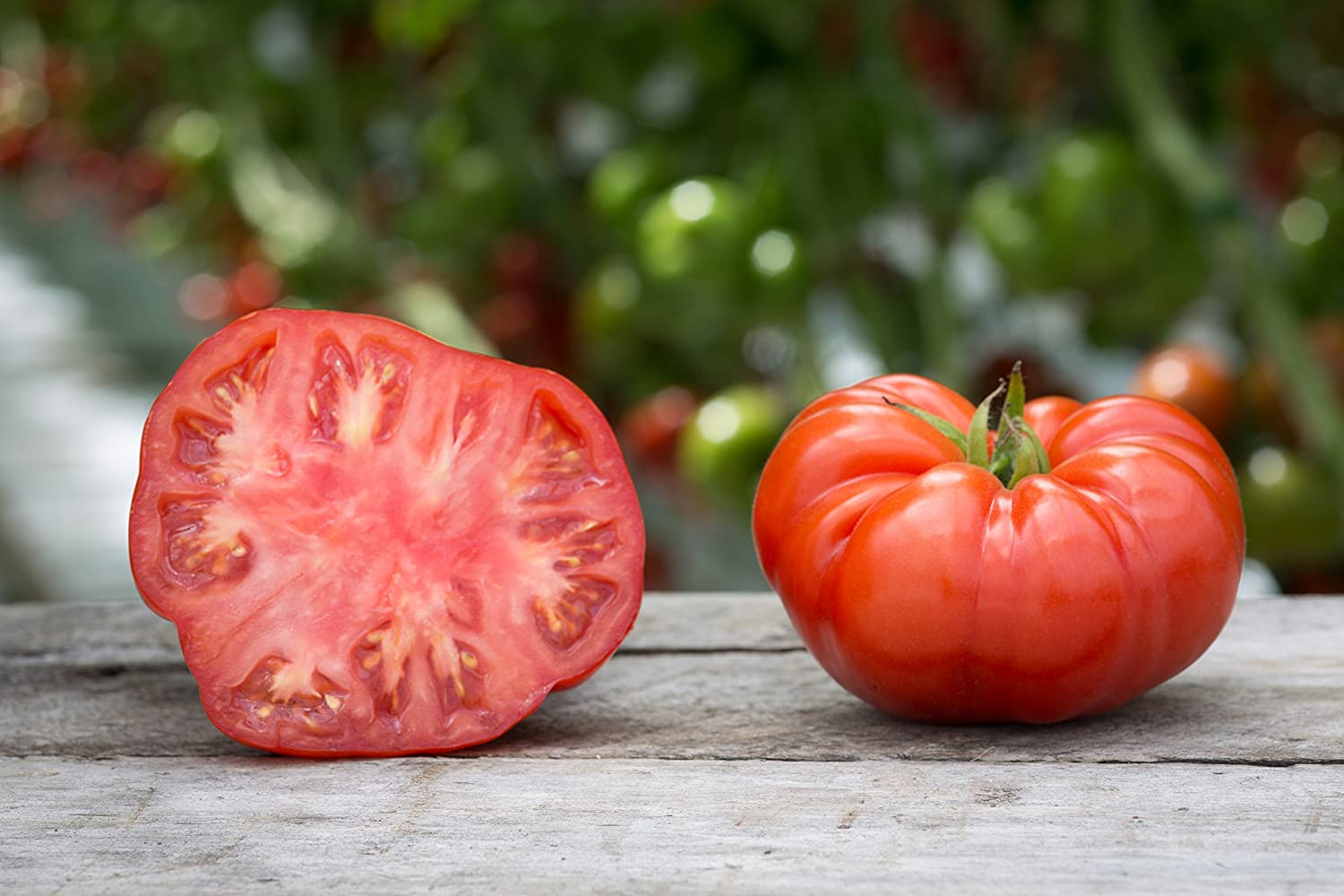 300+ Seeds of Red Beefsteak Tomato Seeds, Non-GMO, Indeterminate Tomato, Open Pollinated, Beef Solanum lycopersicum, Large Fruit, Great Flavor