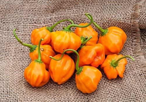 Aji Dulce Orange Heirloom Pepper Premium Seed Packet + More