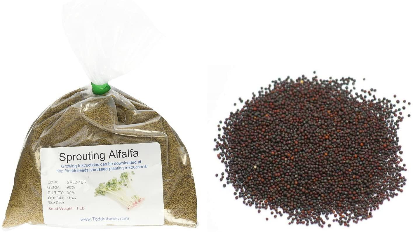 Todd's Seeds - Bundled Chemical Free Alfalfa Sprouting Seeds, 1Lb, & Sprouting Broccoli Seeds, 1Lb, Total of 2Lbs