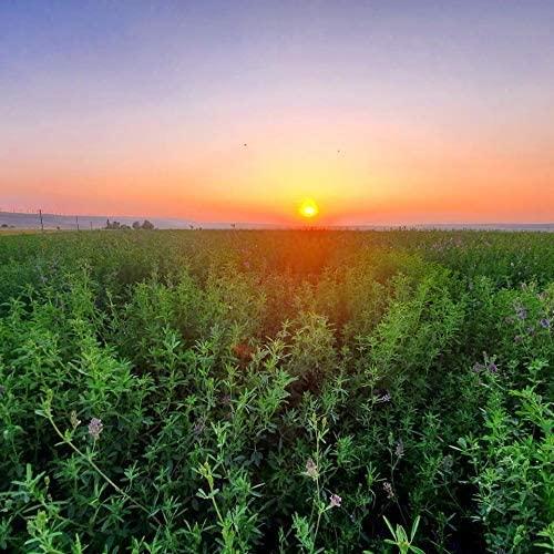 Alfalfa Seeds- Farmer Direct Premium Certified Clean Alfalfa Seeds - 25 LBS - High Germination, Conventional Alfalfa Seed -Garden Seed, Cover Crop, Field Growing, Alfalfa Hay, Alfalfa Honey