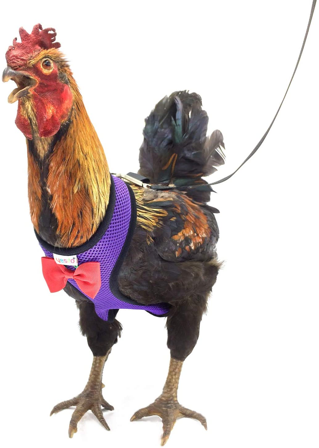 Yesito Chicken Harness Hen Size with 6ft Matching Leash – Adjustable, Resilient, Comfortable, Breathable, Large Size, Suitable for Chicken Weighing About 6.6 Pound,Purple