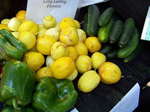 Toyensnow - Cucumber, Lemon, Heirloom (165 Seeds)