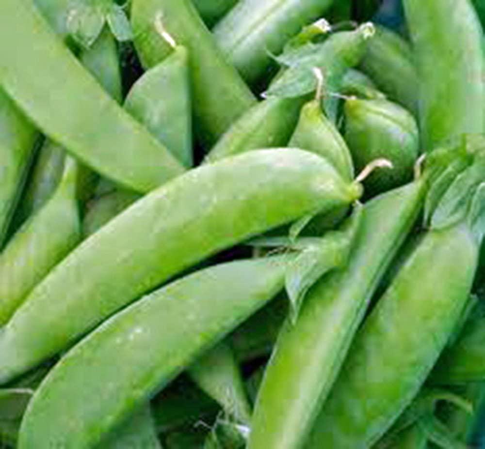 Pea Seed, Sugar Snap Pea, Heirloom, Non GMO, 500 Seeds, Perfect Peas