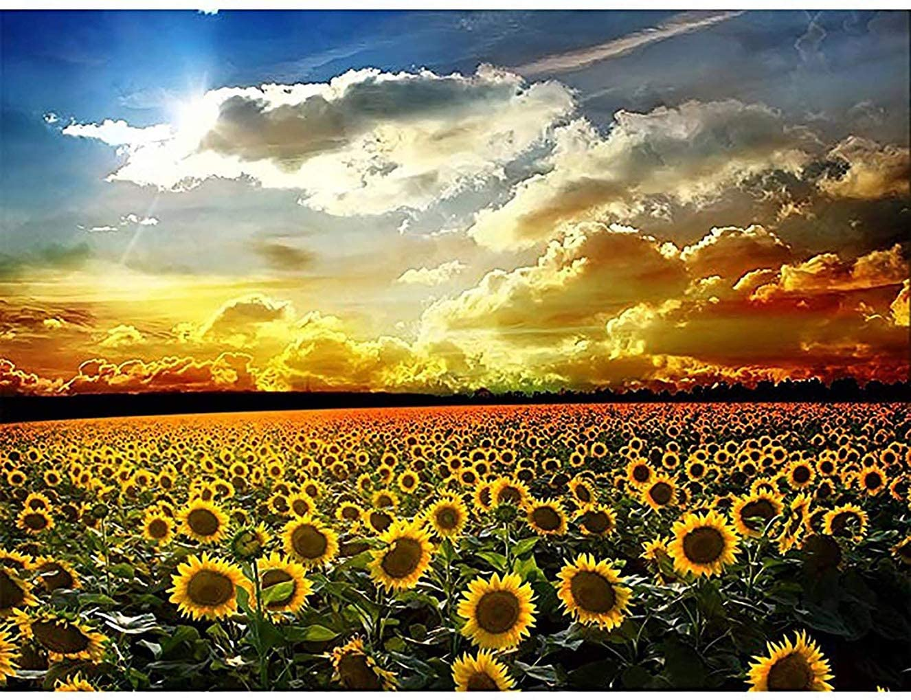 Bimkole DIY 5D Diamond Painting Kit Sunflowers Sky by Number Kits Paint with Diamonds Arts DIY for Home Decor, 16x20 inch(m4-506)