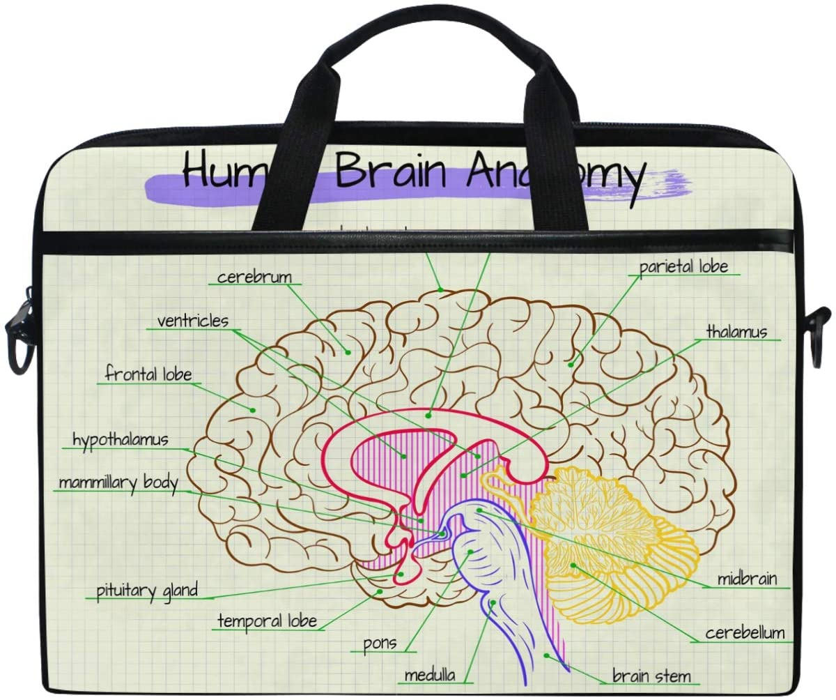 Kaariok Educational Human Body Brain Anatomy Diagram Laptop Shoulder Bag 13-14.5 Inch Sleeve Case Messenger Tablet Carring Briefcase with Handle Strap for Men Women Boys Girls