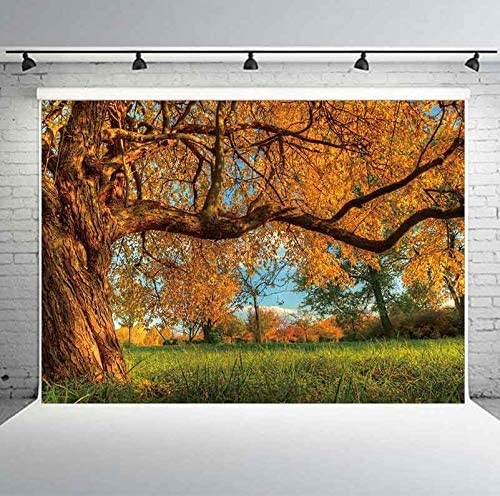 Planck 7x5ft Autumn Forest Backdrop Park Trees Green Grass Yellow Leaves Natural Background for Portrait Studio Props
