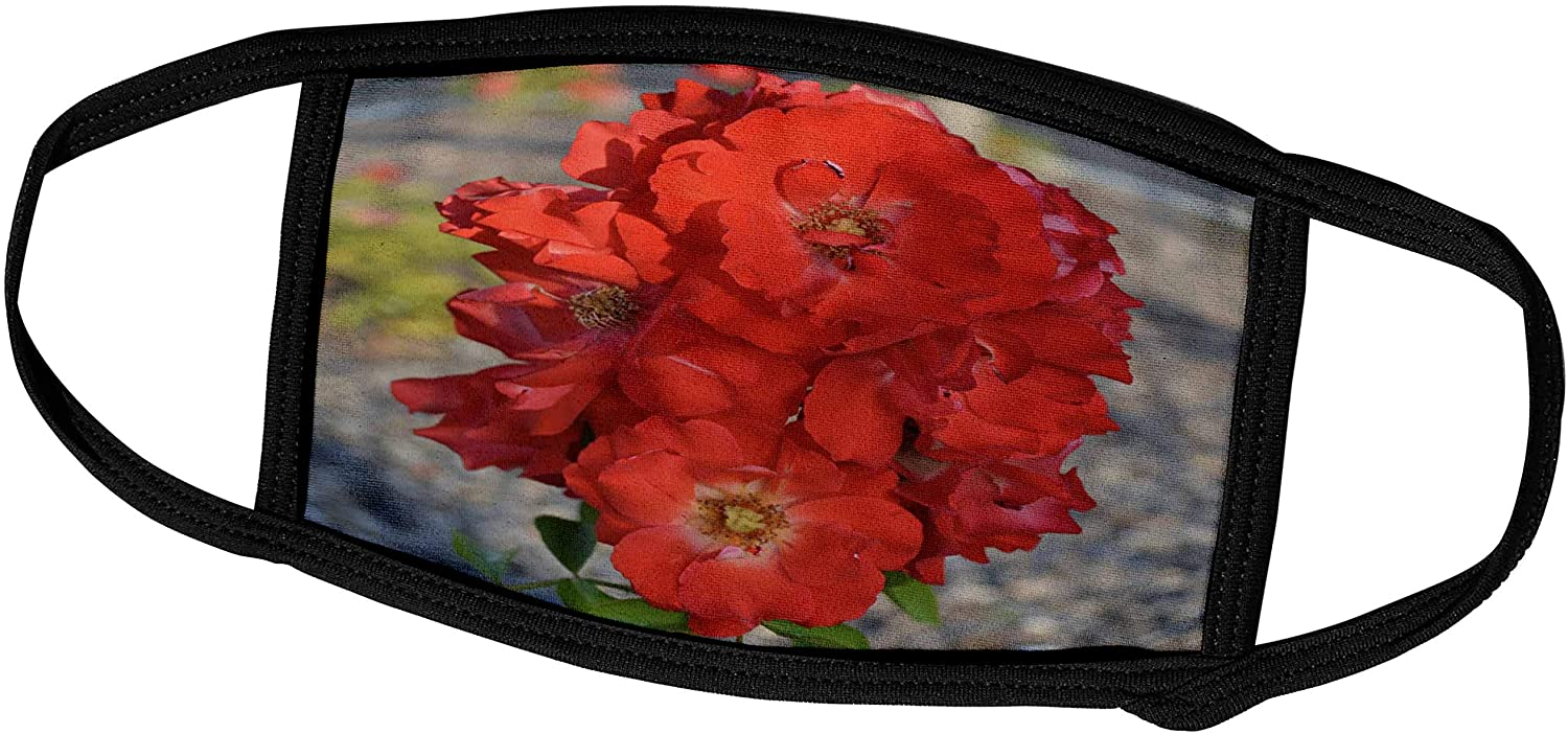 3dRose Patricia Sanders Flowers - Orange Rose Flowers Flower Photography - Face Covers (fc_30357_2)