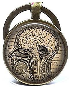 Anatomical Brain Keychain,Human Brain Anatomy Key Ring, Neurologist Gift Keychain, Biology, Medical Student Gift
