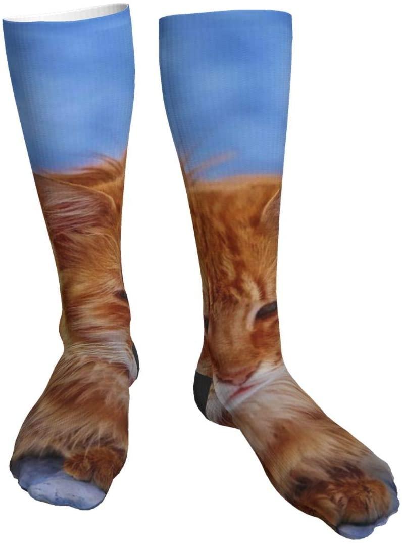 antcreptson Brown Cat Resting Womens Winter Soft Warm Thick Socks