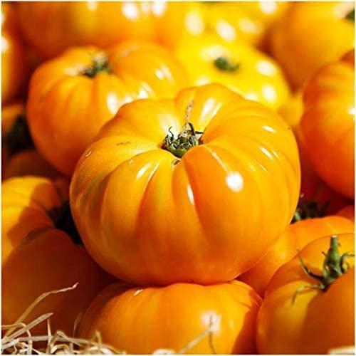 Garden Rare 100pcs Yellow Brandywine Tomato Seeds High yielding Seeds Easy to Grow, Exotic Vegetable Seeds Hardy Perennial Garden